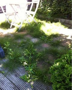 Mestrado em quintal holandês