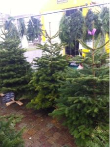 Escolhendo nossa árvore de natal
