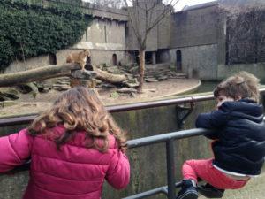 Leões no Artis