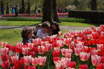 Keukenhof 2020: o parque das tulipas na Holanda
