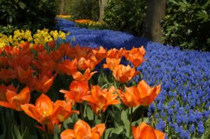Holanda e suas flores