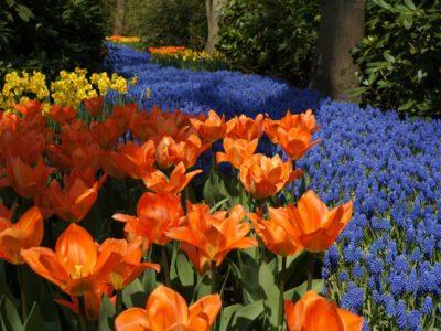 Keukenhof: visitando o parque das flores na Holanda