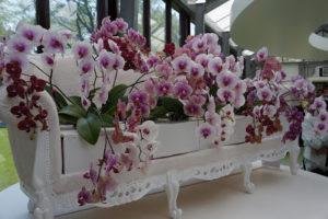 orquídeas holandesas