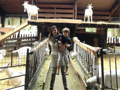 Geitenboerderij: a fazendinha de cabras no bosque de Amsterdam