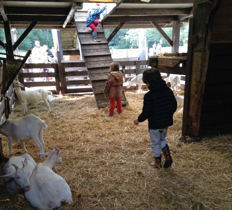 miguel cabritos geitenboerderij