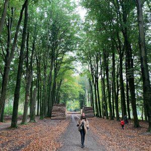 Outono no bosque na Holanda
